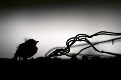 Uccello di bambino Immagine Stock Libera da Diritti