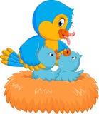 Uccello di bambino nel nido Immagini Stock Libere da Diritti