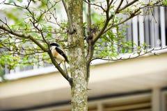 Uccello di Brown su un ramo di albero immagini stock libere da diritti