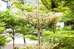 Uccello di Brown su un ramo di albero fotografia stock libera da diritti