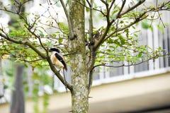 Uccello di Brown su un ramo di albero fotografia stock