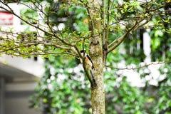 Uccello di Brown su un ramo di albero fotografie stock libere da diritti