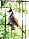 Uccello di canzone Fotografie Stock