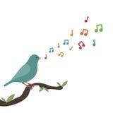 Uccello di canzone Fotografia Stock