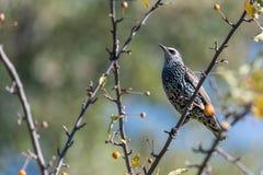 Uccello di canzone in natura immagini stock