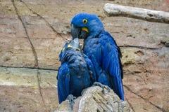 Uccello di Caretaking Immagine Stock Libera da Diritti