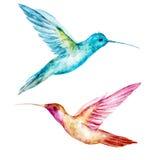 Uccello di colibri dell'acquerello Immagini Stock Libere da Diritti