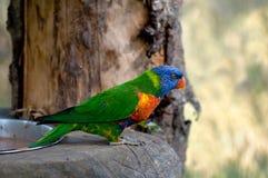 Uccello di colore Fotografia Stock