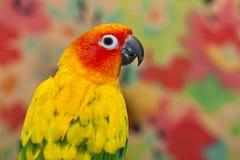 Uccello di colore Immagini Stock Libere da Diritti