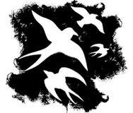 Uccello di Grunge Immagini Stock Libere da Diritti