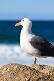 Uccello di mare Immagini Stock