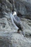Uccello di mare immagine stock