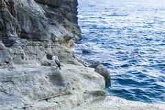 Uccello di mare fotografie stock libere da diritti