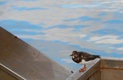 Uccello di mare che guarda qualcosa nell'aria con il mare e l'aria aperta fotografia stock libera da diritti