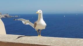 Uccello di mare del sole dei gabbiani di Corse Bonifacio fotografie stock