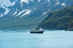 Uccello di mare di National Geographic nella baia di ghiacciaio Fotografie Stock Libere da Diritti
