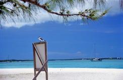 Uccello di mare sul segno - un certo granulo visibile Immagine Stock Libera da Diritti