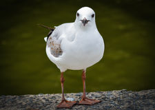 Uccello di modello Fotografie Stock Libere da Diritti