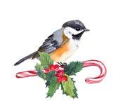 Uccello di Natale sul bastoncino di zucchero con il vischio di natale watercolor Fotografia Stock