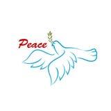 Uccello di pace con ramo di ulivo verde Immagini Stock