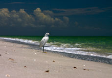 Uccello di puntello di pesca Fotografia Stock Libera da Diritti