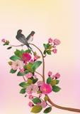 Uccello di Sakura. cartolina Immagine Stock Libera da Diritti