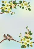 Uccello di Sakura. cartolina Immagini Stock