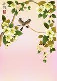 Uccello di Sakura. cartolina Fotografia Stock Libera da Diritti