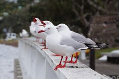 Uccello di Segal Fotografie Stock
