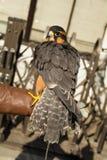 Uccello di Shininng Fotografie Stock Libere da Diritti