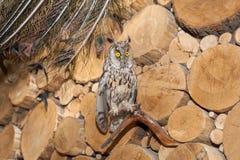 Uccello di tassidermia Immagini Stock