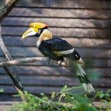Uccello di Toucan Immagini Stock