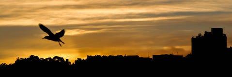 Uccello di tramonto Immagine Stock Libera da Diritti