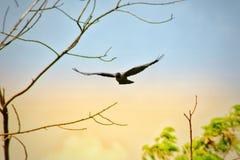 Uccello di volo immagini stock