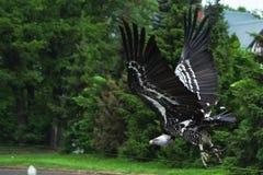 Uccello di volo Fotografia Stock