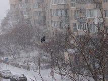 Uccello di volo durante la bufera di neve Fotografia Stock