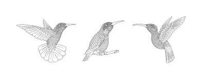 Uccello di Zendoodle Il colibrì disegnato a mano con la mano annega le piume di scarabocchio illustrazione di stock