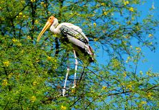 Uccello dipinto della cicogna immagine stock