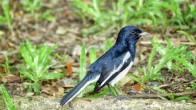 Uccello diritto Immagini Stock