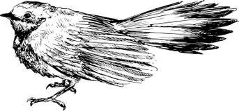 Uccello disegnato a mano Fotografie Stock