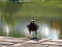 Uccello divertente Fotografie Stock