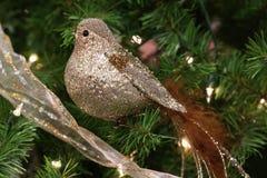 Uccello dorato Fotografie Stock