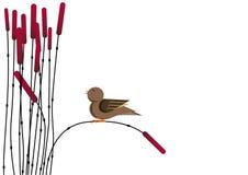Uccello e canna Fotografie Stock Libere da Diritti