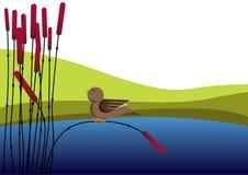 Uccello e canna Fotografia Stock