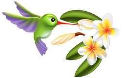 Uccello e fiori di ronzio Fotografia Stock Libera da Diritti