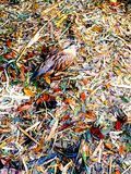 Uccello e foglie fotografie stock libere da diritti