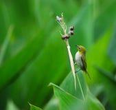 Uccello e frutta matura fotografia stock
