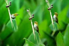 Uccello e frutta matura fotografie stock libere da diritti