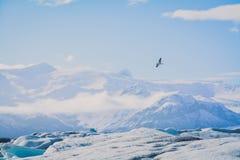 Uccello e ghiaccio Fotografie Stock