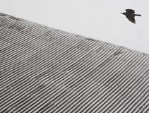 Uccello e la geometria Immagine Stock